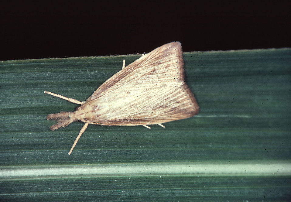 Moths: Is Your Home Under Attack?